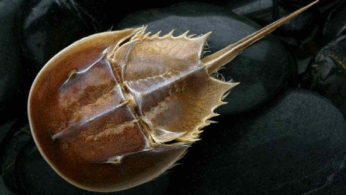 Fosil Otak Berusia 310 Juta Tahun, Terawetkan dengan Sempurna